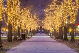 zoo lights stoneham coupons go global boston homestay blog