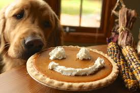 golden retriever thanksgiving pictures festival collections
