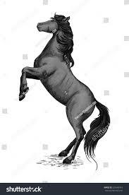 black mustang horse wild horse stallion rearing mustang rage stock vector 531640354