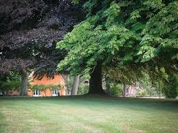 albero giardino da giardino