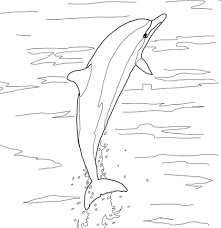 spinner dolphin jumping coloring page free printable coloring pages