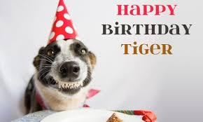 Tiger Mom Memes - 100 ultimate funny happy birthday meme s my happy birthday wishes