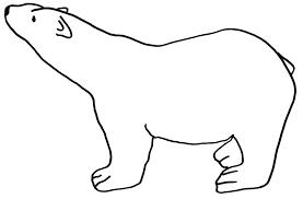 photos polar bear drawing template polar bear coloring