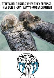 Cuteness Overload Meme - cuteness overload meme collection the best of the cuteness