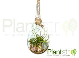 decorating attractive hanging teardrop glass terrarium with