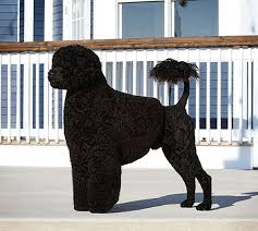 afghan hound national dog show my 10 predictions for the national dog show