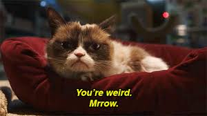 Christmas Grumpy Cat Meme - the 8 best memes from grumpy cat s worst christmas ever