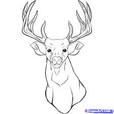 how to draw a realistic deer draw real deer step by step