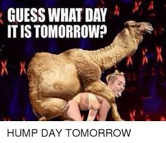 Hump Day Camel Meme - guess what day itis tomorrow a hump day tomorrow hump day meme