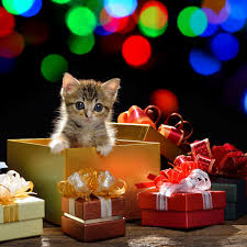 cat christmas 6 christmas safety tips for cat owners catster