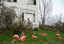pink flamingo creator don featherstone ascends to lawn ornament