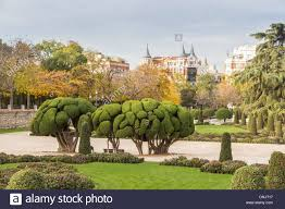 Topiary Cloud Trees - cloud pruned bushes topiary in retiro park madrid spain stock