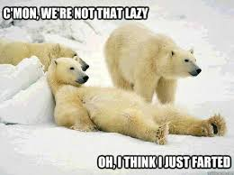 Polar Bear Meme - lazy polar bears memes quickmeme