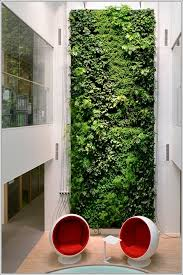indoor vine plant vine covered walls