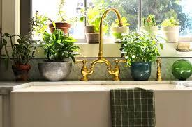 plante cuisine les plantes animent la cuisine ma plante mon bonheur