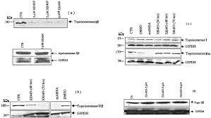 2 4 7 chloro 2 quinoxalinyloxy phenoxy propionic acid xk469