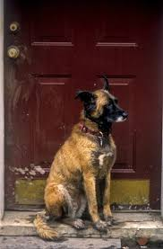 Dog Blinds How To Keep My Dog From Destroying My Mini Blinds Dog Care The