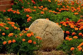 Desktop Rock Garden Flowers Rocks Flowers Garden Rock Beautiful Rocky Flower