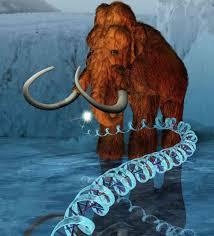 mammoth dna successfully resurrected cloning won u0027t happen