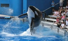 why are orca called killer whales howstuffworks
