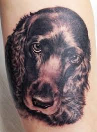 afghan hound underwater seth casteel the guy who did the underwater dog photos has this