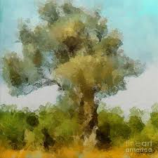 old olive tree painting by dragica micki fortuna