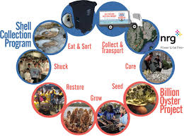 cycle shell billion oyster project earth matter