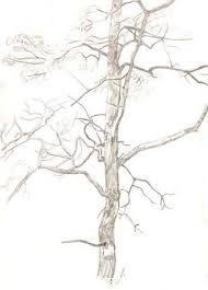 how to draw trees tutorial excellent the pdf is fantastic http