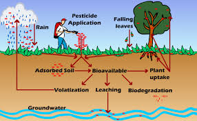 persistence and bioaccumulation of persistent organic pollutants