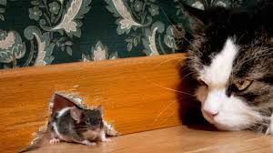 get rid of mice naturally and keep them away