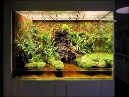 nitelyechos blog vivarium project vivariums terrariums