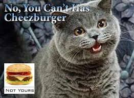 I Can Has Cheezburger Meme - meme musicals i can has cheezburger and lolcats take on the