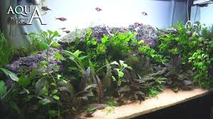 Aquascape Malaysia Aquascaping Lab Tutorial Natural Planted Aquarium