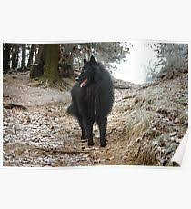 belgian sheepdog merchandise belgian breed gifts u0026 merchandise redbubble