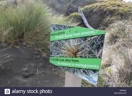 plants native to new zealand native plants protect dunes from erosion sign on waikanae beach