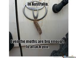 Moth Meme - big ass moths by abcd1594 meme center