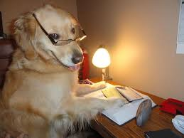 Orange Dog Meme - heartfelt tribute to golden bailey creator of funny dog memes