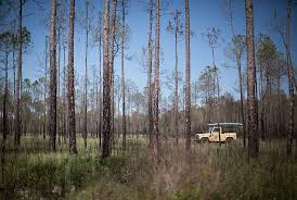 Washington forest images Mcquage bayou trail reopens at point washington state forest 30a jpg