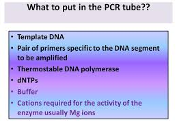 pcr is amplification of dna in a tube what to put in the pcr tube