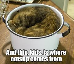 Funny Memes App - lolcats page 2 lol at funny cat memes funny cat pictures