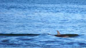 some is shooting adorable dolphins in australia vice