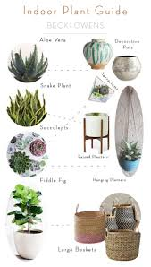 Indoor Plants by Indoor Plant Guide Becki Owens