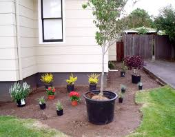 garden and patio simple low maintenance front side yard landscaping