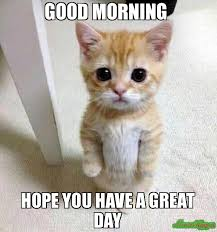 Have A Great Day Meme - good morning hope you have a great day meme kitten timesheet