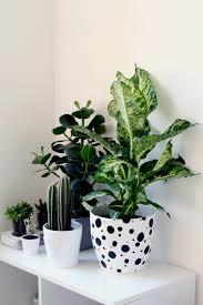 12 modern planters to diy for dalmatian planters and pom pom rug