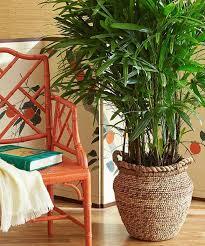 plantes dans la chambre quelle plante pour quelle pièce de votre intérieur
