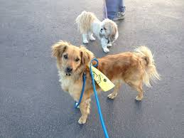 dog ribbon do you what a yellow ribbon on a dog s collar means