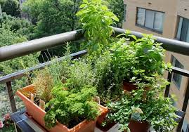 how to make a balcony herb garden complete tutorial