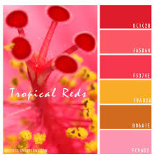 Red Color Combination Red Hibiscus Flower Palette Texture Online