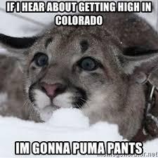 Puma Meme - pooping puma meme generator